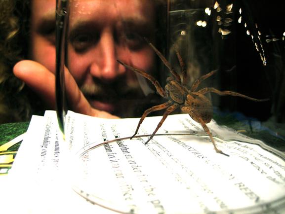 Pregnant Wolf Spider; Gainesville, FL
